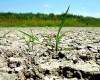 Peste 16.500 de bihoreni au solicitat sprijinul de seceta