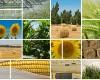 Romania, o tara preponderent agricola cu dezvoltare antropica slaba
