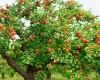 Preturile rasadurilor, ale pomilor si ale semintelor, judet cu judet