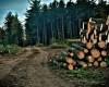 Romania ar putea interzice temporar exportul de lemn neprelucrat
