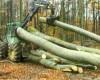Suspendarea exportului de lemne va fi promovată prin lege