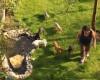 Pet Hotel Cluj, locul unde clujenii își pot caza animalele de companie când pleacă în vacanță