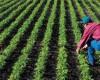 Fermierii, supăraţi pe Ministerul Agriculturii